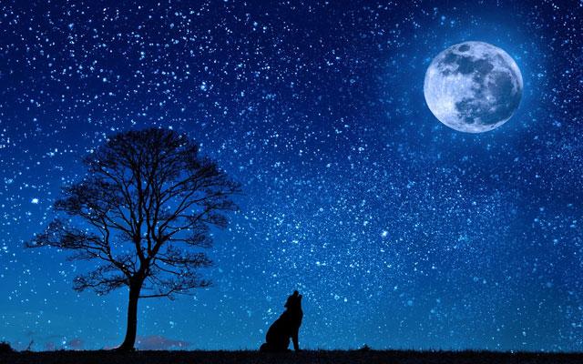 luna lupo